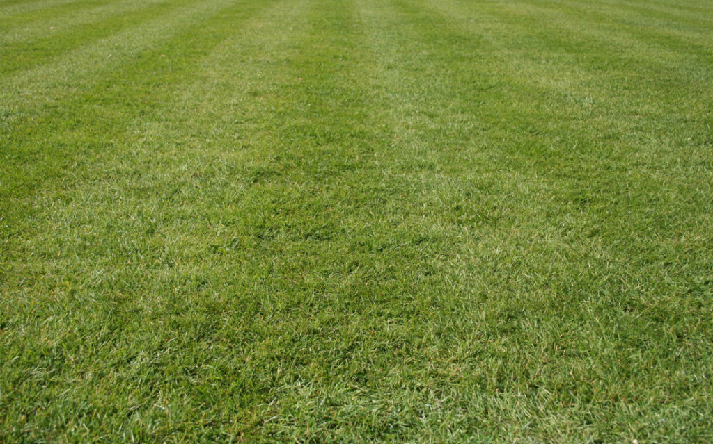 Fort Collins CO Lawn Care