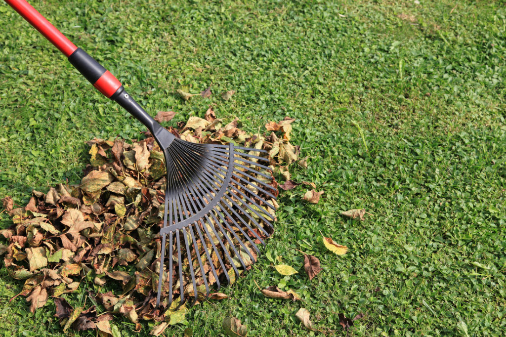 Fort Collins Spring and Fall Yard Cleanup