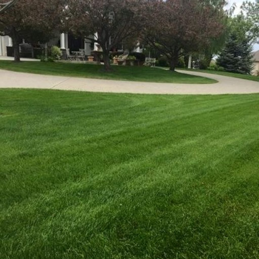 Lawn Care Fort Collins