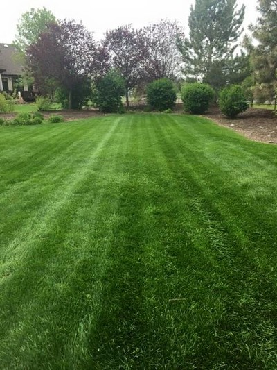 Lawn Mowing Fort Collins