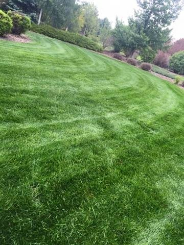 Professional Lawn Company in Fort Collins